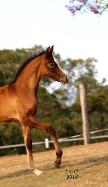 2013 foals