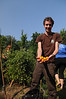 110729018 - Picking vegetables in the organic garden. Photo by Evan Cantwell/Creative Services/George Mason University