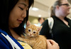Students play with kittens at the Law School's Puppy Day in Robert A. Levy Atrium in Hazel Hall at George Mason University's Arlington Campus. The event, part of de-stress week, is hosted by A Forever-Home Rescue Foundation and Homeward Trails, two non-profit animal rescue groups. Photo by Alexis Glenn/Creative Services