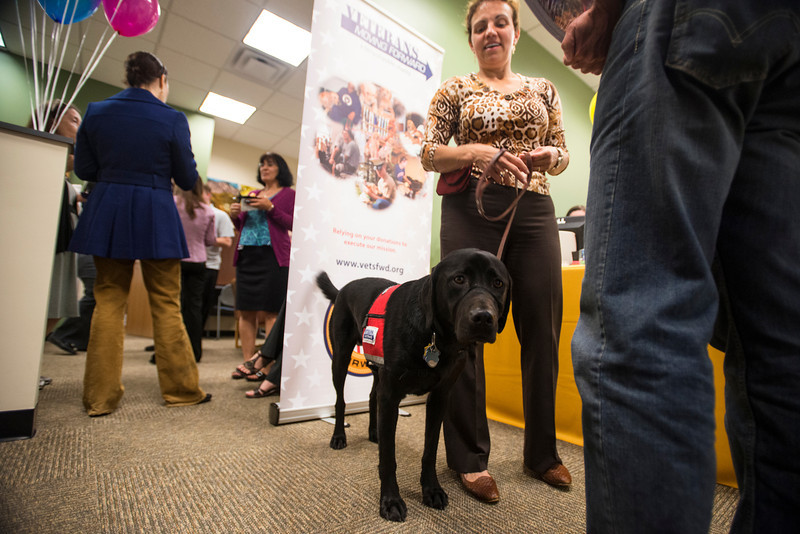Josh, an Assistance Dog in Training from the non-profit organization Veteran's Moving Forward, visits students in the Office of Military Services at Fairfax Campus. Photo by Alexis Glenn/Creative Services/George Mason University