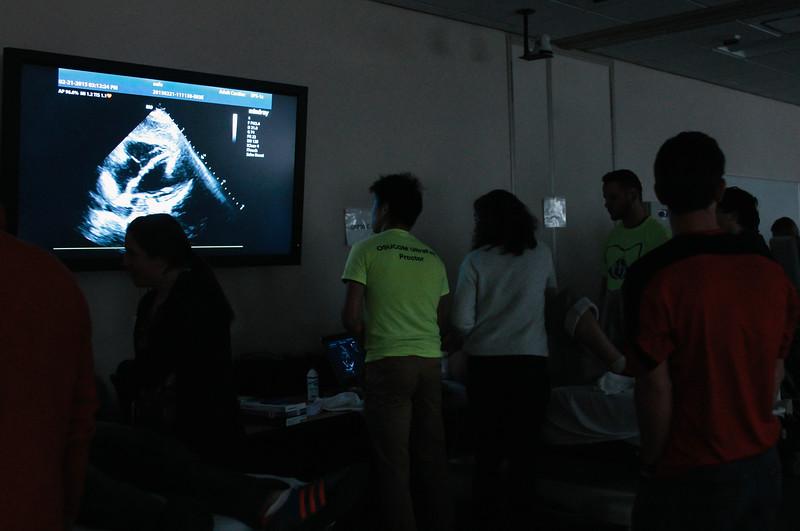 2015 Ultrafest