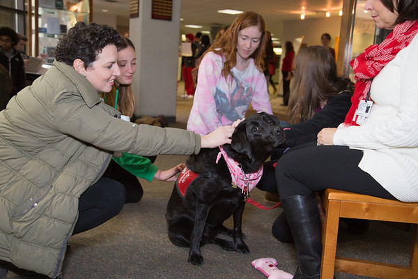 Valentine's Day Therapy Dog Visit - Feb. 2017