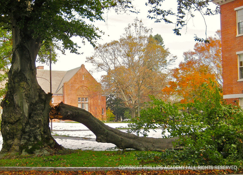 A split 80-year-old beech by Abbot Hall (looking across Abbot Circle toward McKeen Hall)