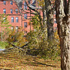 The Maple Walk suffered relatively little damage (Abbot campus,toward Draper Hall)