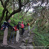 The cloud forest along the Inca Trail.
