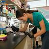 Lindsay Cheu (Johns Hopkins) interning at the Cancer Research Center. Photo: Mark Schmidt