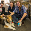 Several times during the academic year therapy dogs are brought to campus to help students de-stress during final exams week.  Photos Mark Schmidt