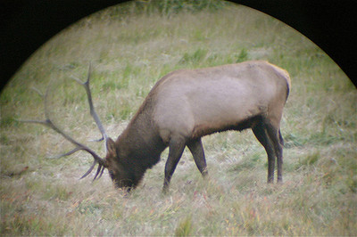 Field Zoology: Elk rut in Rocky Mtn Nat'l Park, taken through binoculars. (submitted by Katharine Teter)