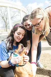 Students volunteer at the Lauderdale County Animal Shelter. These dogs are on their last hope of adoption so the students took them to the campus in hopes they will be seen and wanted.