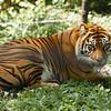 Toronto_Zoo_1703