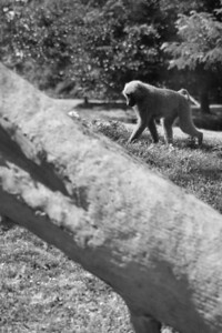 Toronto_Zoo_1567