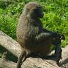 Toronto_Zoo_1557