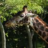 Toronto_Zoo_1484