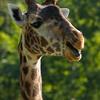 Toronto_Zoo_1506