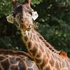 Toronto_Zoo_1466
