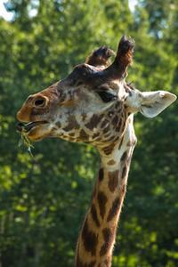 Toronto_Zoo_1515