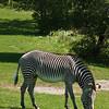 Toronto_Zoo_1615