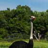 Toronto_Zoo_1526