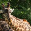 Toronto_Zoo_1478