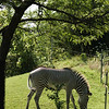 Toronto_Zoo_1571