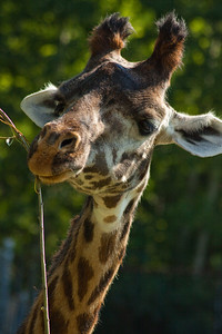 Toronto_Zoo_1489