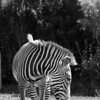 Toronto_Zoo_1611