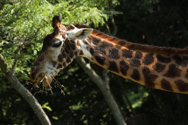Toronto_Zoo_1485