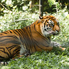 Toronto_Zoo_1696