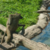 Toronto_Zoo_1544