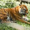 Toronto_Zoo_1728
