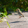 Toronto_Zoo_1626