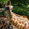 Toronto_Zoo_1476