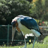 Toronto_Zoo_1584