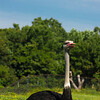 Toronto_Zoo_1531