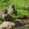 Toronto_Zoo_1568