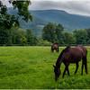Vermont Arlington Horses 1 August 2009