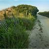 Stone Harbor NJ Path to Stone Harbor Point July 2014