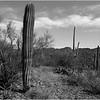 Tucson Arizona April 2008 Saguaro NP 1,