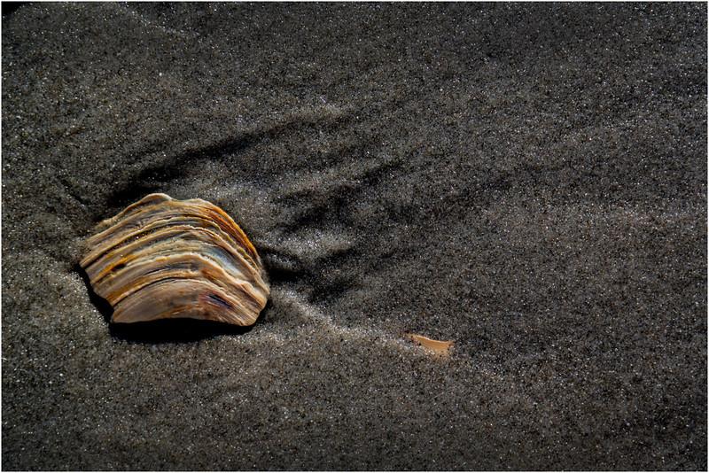 Avalon NJ August 2015 Tideline Shells 4