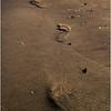Avalon NJ August 2015 Tideline Footsteps 3