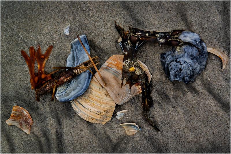 Avalon NJ August 2015 Tideline Shells 10