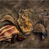 Avalon NJ August 2015 Tideline Shells 47