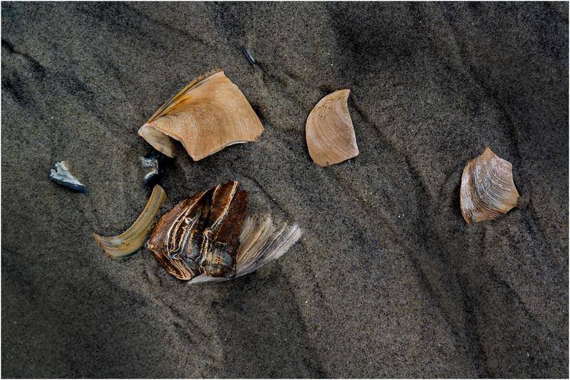 Avalon NJ August 2015 Tideline Shells 9