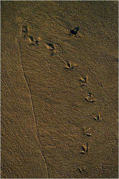 Avalon NJ August 2015 Tideline Footsteps 2