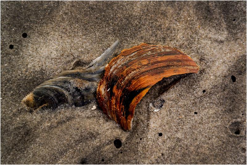 Avalon NJ August 2015 Tideline Shells 46