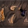 Avalon NJ August 2015 Tideline Shells 60