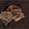 Avalon NJ August 2015 Tideline Shells 65