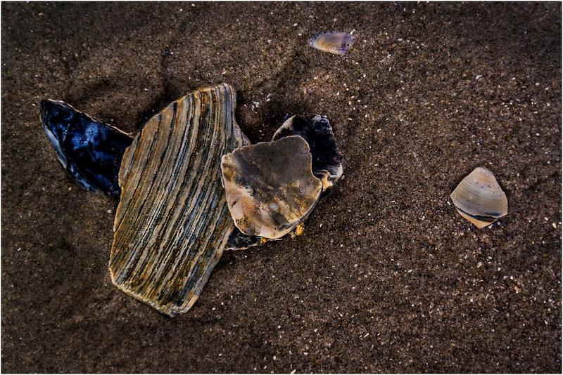Avalon NJ August 2015 Tideline Shells 56