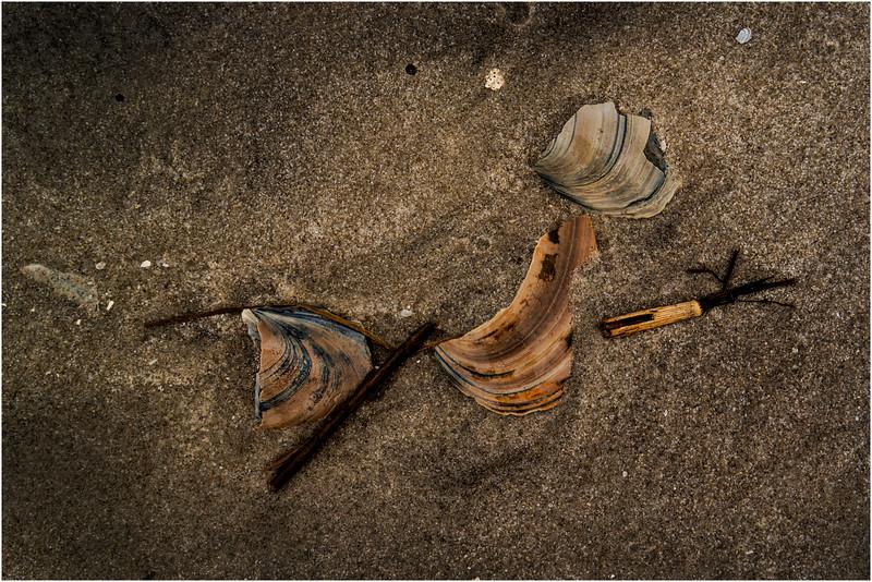 Avalon NJ August 2015 Tideline Shells 14