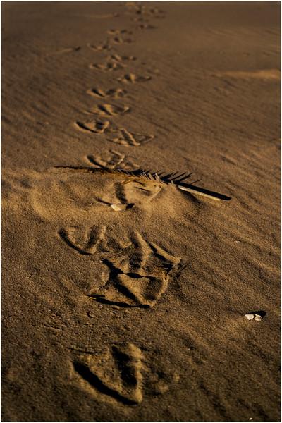 Avalon NJ August 2015 Tideline Footsteps 5